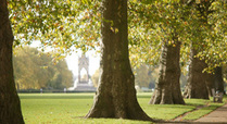 Trees_in_the_royal_parks_signpost