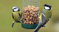 Blue_tit_s_eating_nuts_signpost