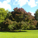 Common_ash_tree_in_park_tiny_square