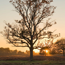 Sunset_in_bushy_park_square